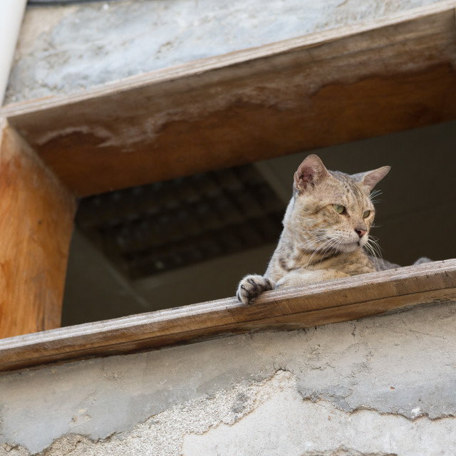 """street cat stalking prey from higher ground"" stock image"