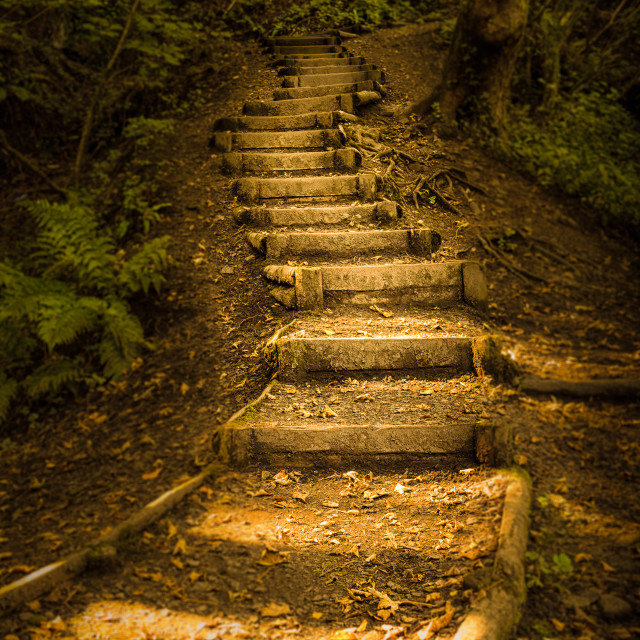 """Autumn forest steps"" stock image"