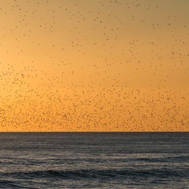 """Birds fishing at sunset"" stock image"
