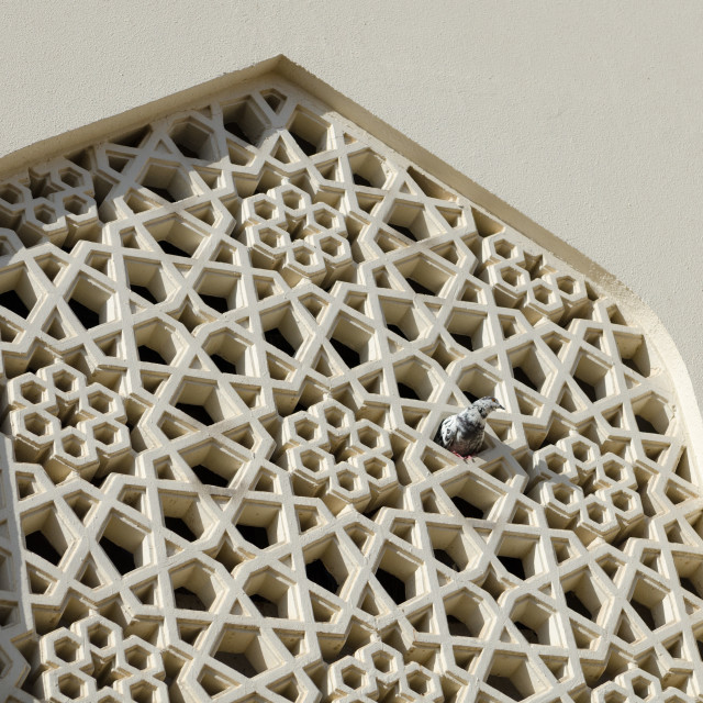 """""""pigeon peaking out of a traditional design mosque widow"""" stock image"""