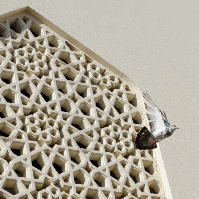 """""""pigeon flying out of a traditional design mosque widow"""" stock image"""