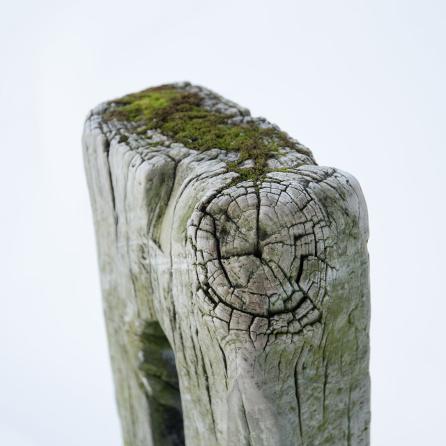 """""""very old wooden textured gatepost in a snowy white setting"""" stock image"""