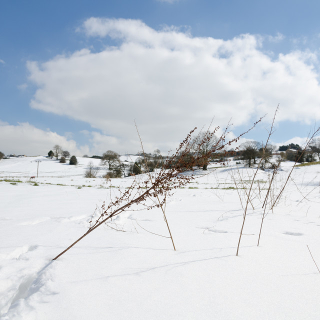 """""""snowy sunny wintery day in a european field with beautiful blue sk"""" stock image"""