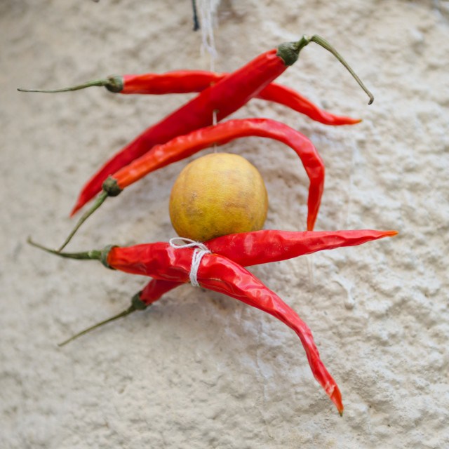 """""""hanging drying red chillies"""" stock image"""
