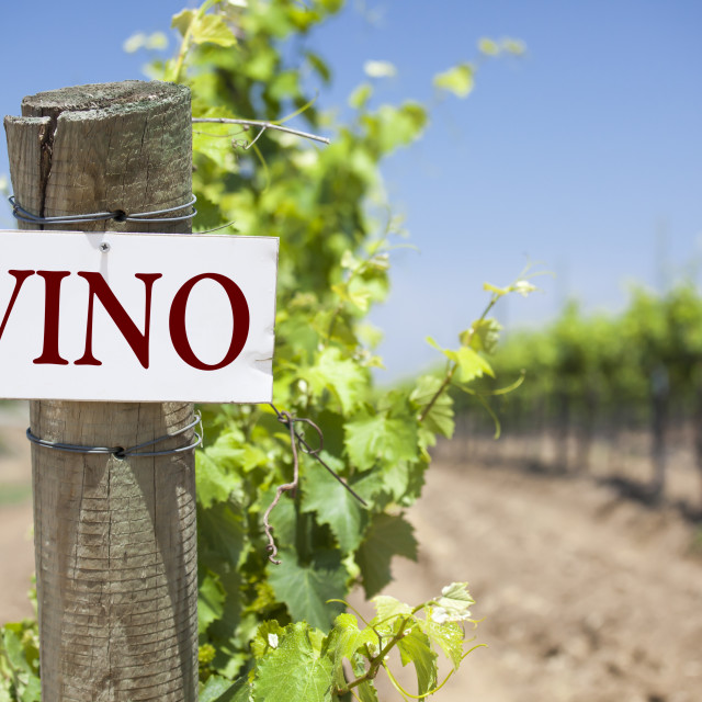 """""""Vino Sign On Post at the End of a Vineyard Row of Grapes."""" stock image"""