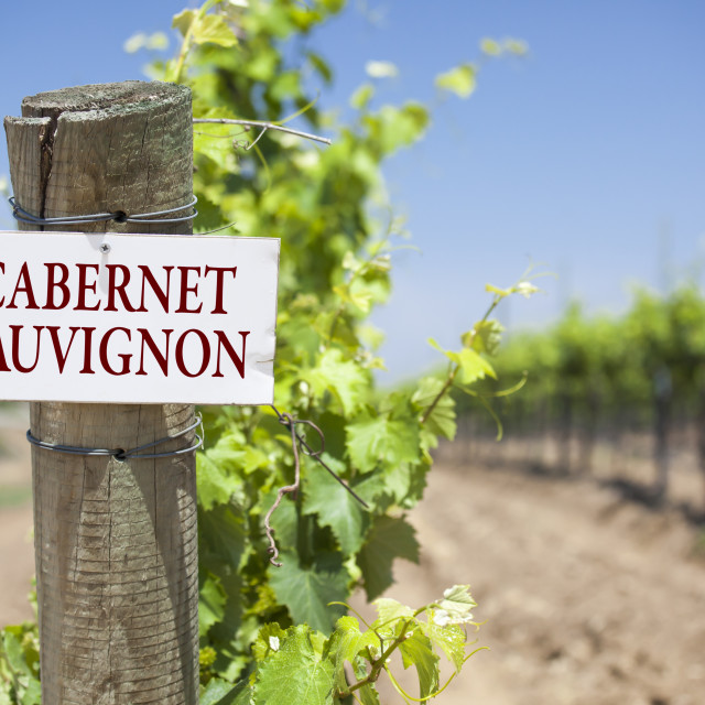 """""""Cabernet Sauvignon Sign On Post at the End of a Vineyard Row of Grapes."""" stock image"""