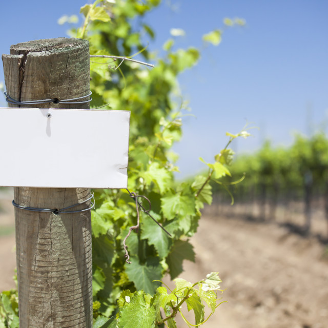 """""""Grape Wine Vineyard with Wooden Post Holding Blank Sign Ready for Your Own Text."""" stock image"""