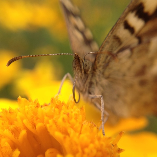 """Butterfly pollinating a flower"" stock image"