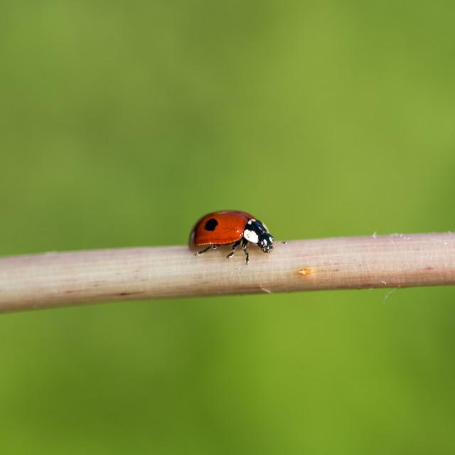 """""""Ladybug II"""" stock image"""