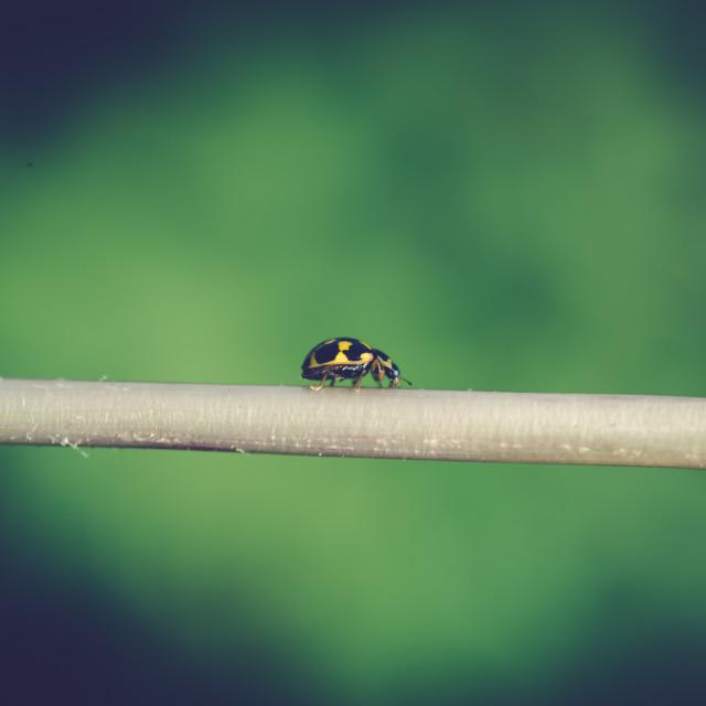 """""""Yellow ladybug I"""" stock image"""