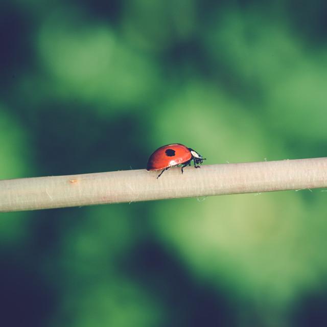 """""""Ladybug walk I"""" stock image"""