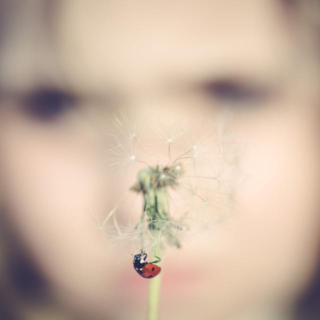 """Girl and dandelion I"" stock image"