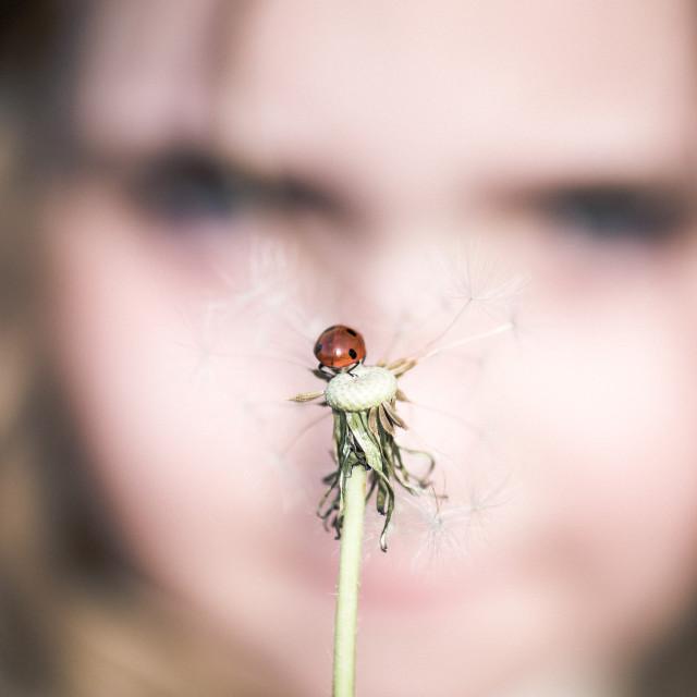 """""""Girl and dandelion II"""" stock image"""