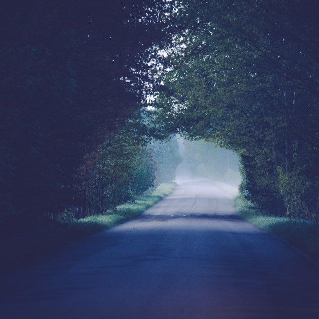 """""""Green tunnel"""" stock image"""