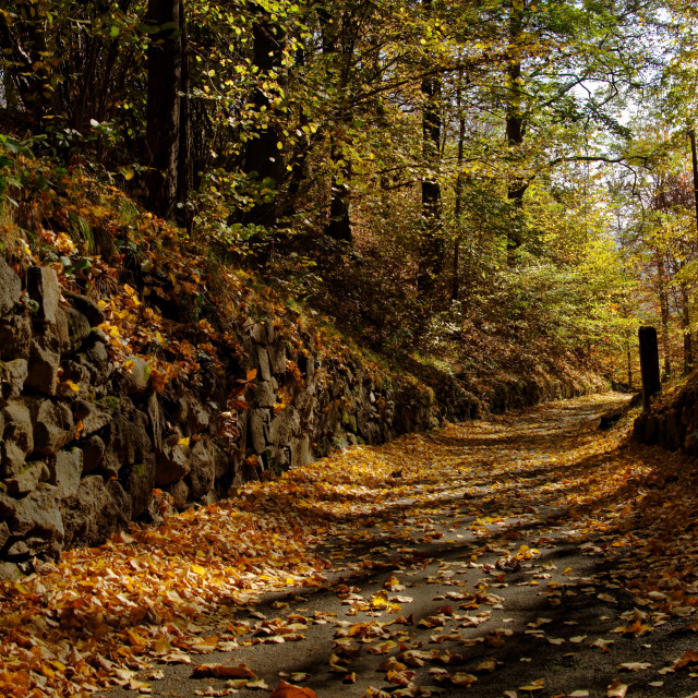 """""""Isolated road in Autumn: Intense colors in November"""" stock image"""