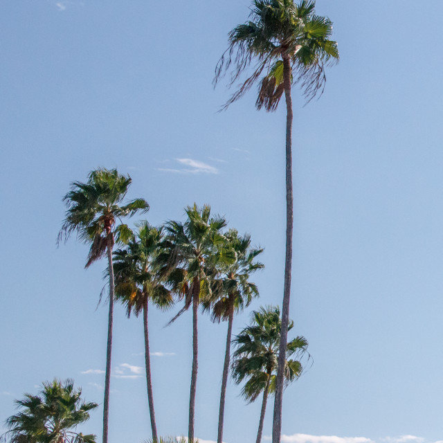 """Palm trees"" stock image"
