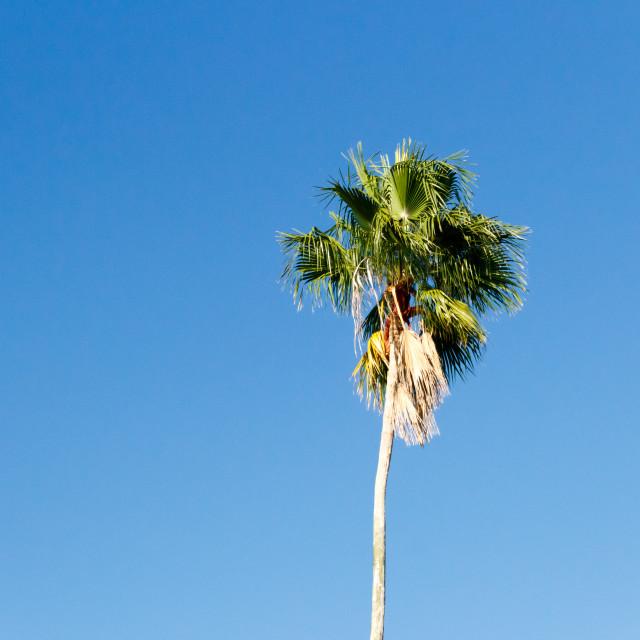 """""""Palm tree"""" stock image"""