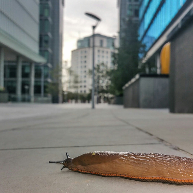 """Corporate Slug"" stock image"