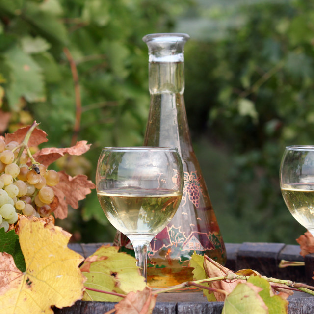"""white grape and wine"" stock image"