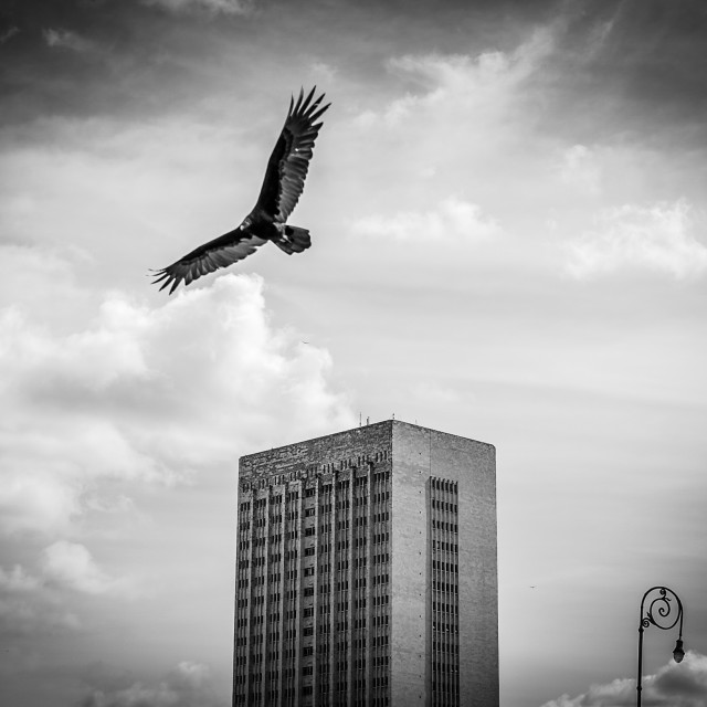 """Eagle Over The Malecon"" stock image"