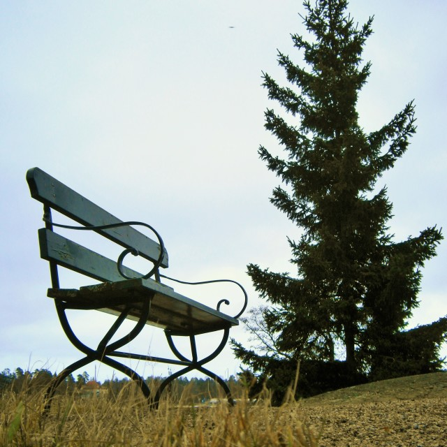 """Bench and spruce"" stock image"