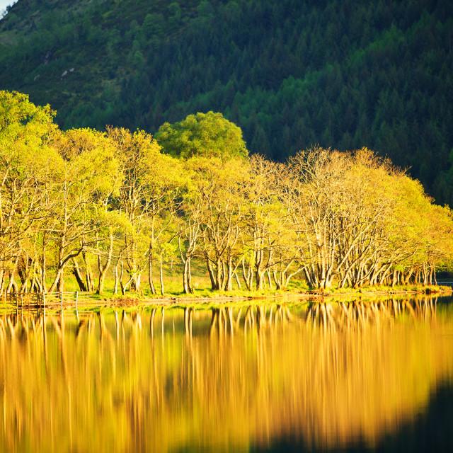 """""""Golden Loch1"""" stock image"""