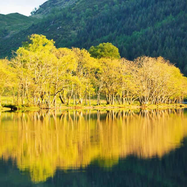 """""""Golden Loch2"""" stock image"""