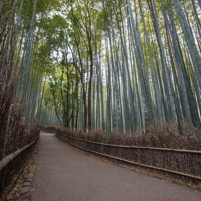 """Chikurin-no-Michi, Bamboo Forest"" stock image"
