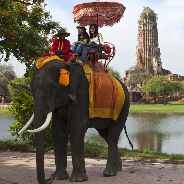 """""""Elephant Tour at Ayutthya"""" stock image"""