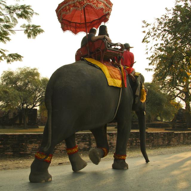 """""""Elephant Ride at Ayutthya"""" stock image"""