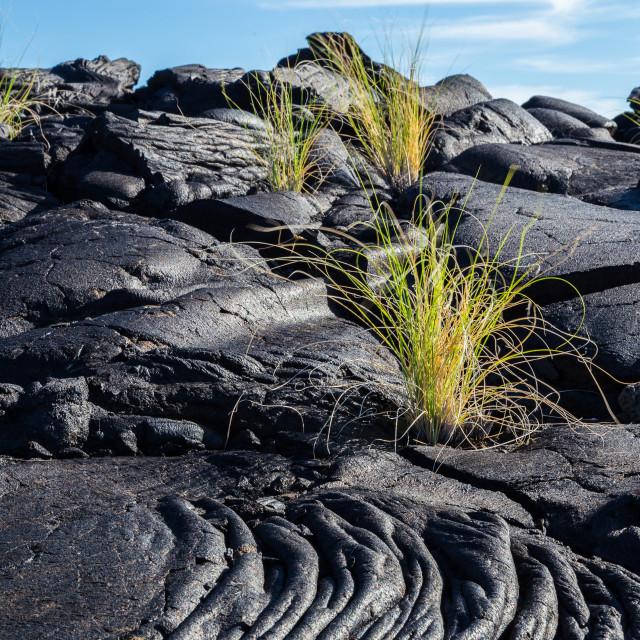 """Black Lava Flow"" stock image"