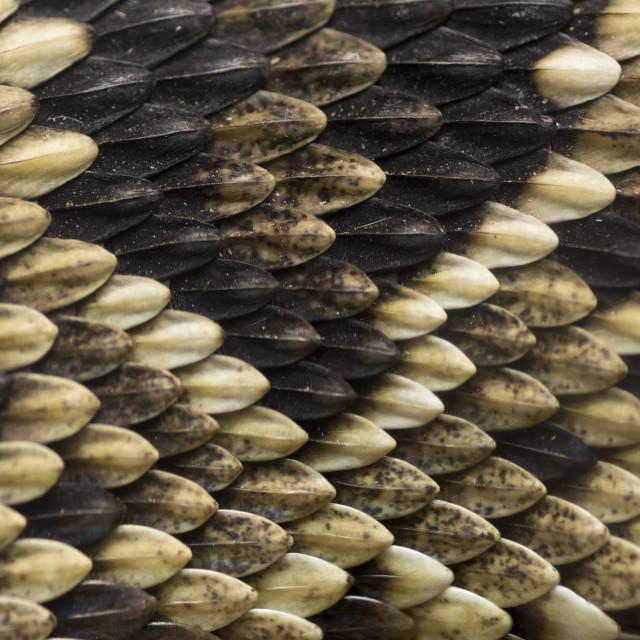 """Snake Skin"" stock image"