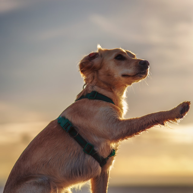 """puppy wave"" stock image"