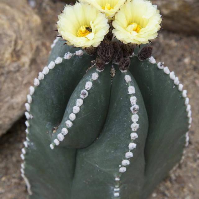 """Cactus"" stock image"