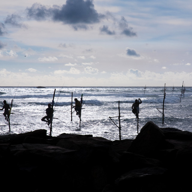 """Sri Lanka Stilt Fishing"" stock image"