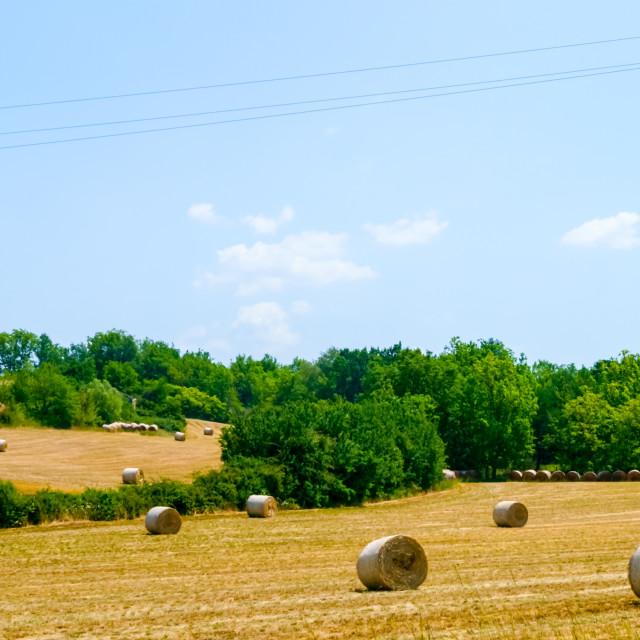"""""""Golden hay bales"""" stock image"""