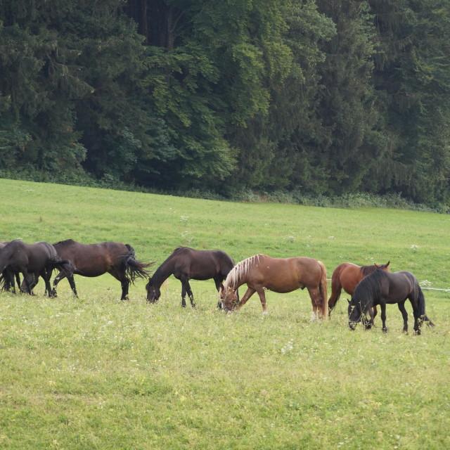 """Horses feeding"" stock image"
