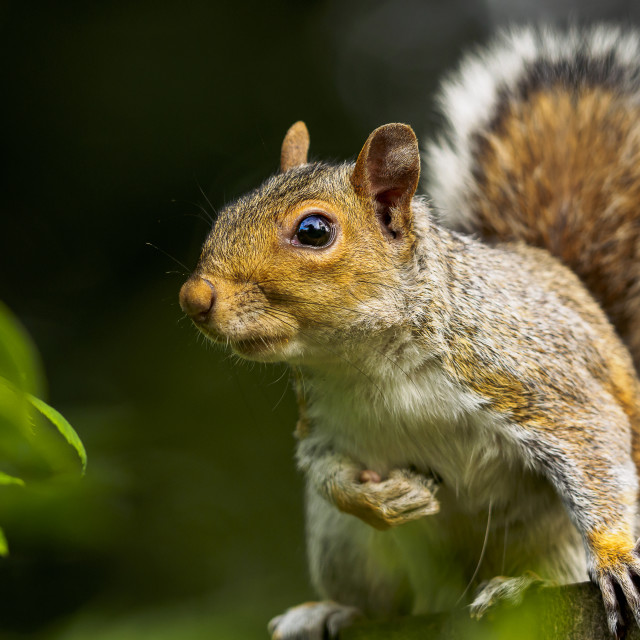 """""""Squirrel on fence"""" stock image"""