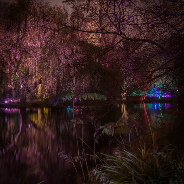 """""""Enchanted Forest"""" stock image"""