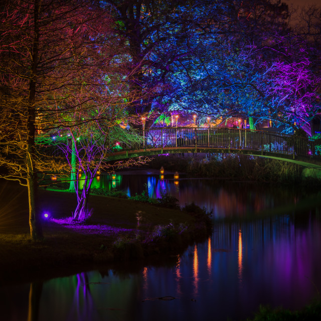 """Enchanted Woodland Syon Park"" stock image"