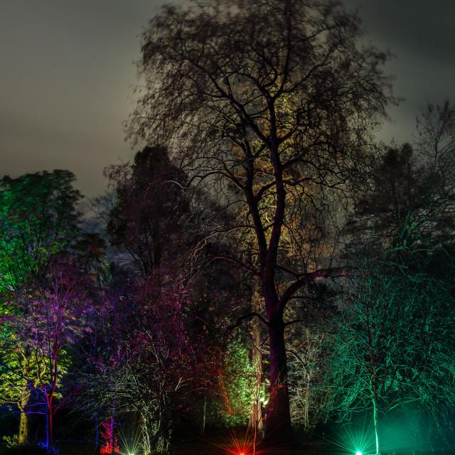 """""""Enchanted Woodland Walk"""" stock image"""