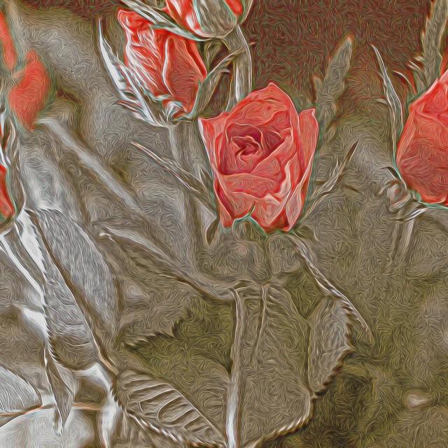 """Rose Bouquet"" stock image"