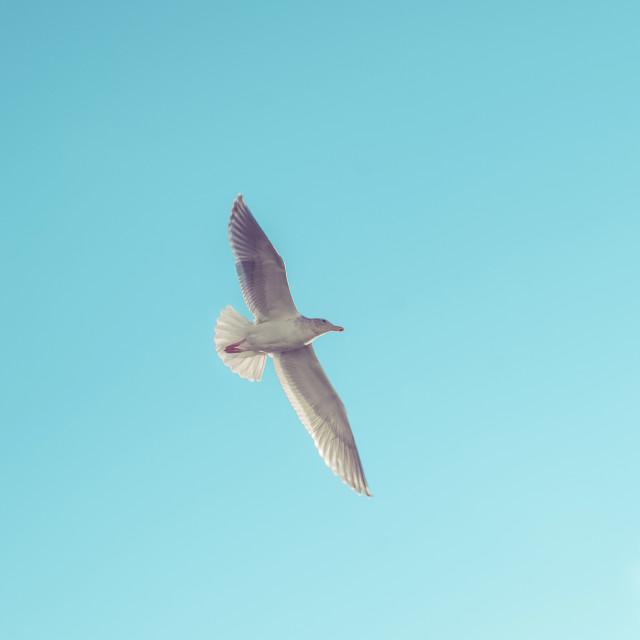 """Seabird in Flight"" stock image"