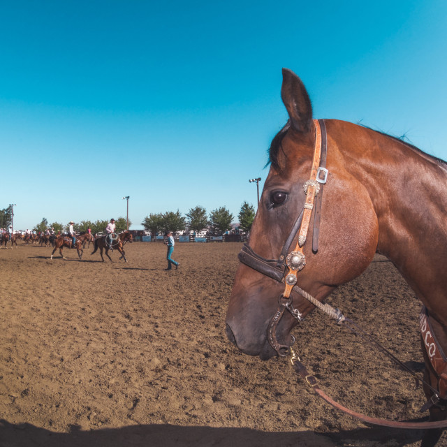 """""""Rodeo Horse"""" stock image"""