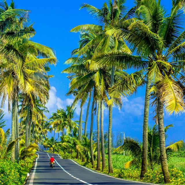 """Southern Mauritius"" stock image"