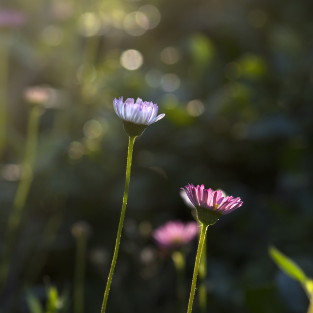 """Electric Daisyland"" stock image"