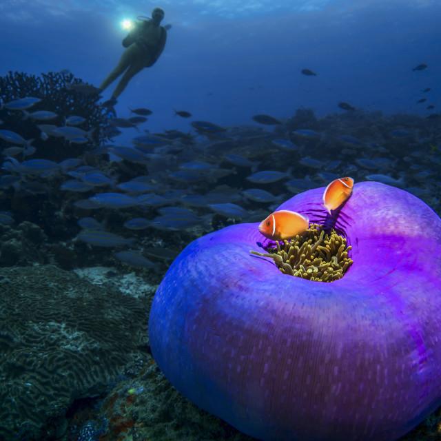 """""""Nemo reloaded"""" stock image"""