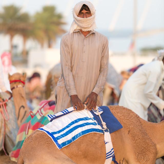 """""""Dubai camel racing club camel and young keeper."""" stock image"""
