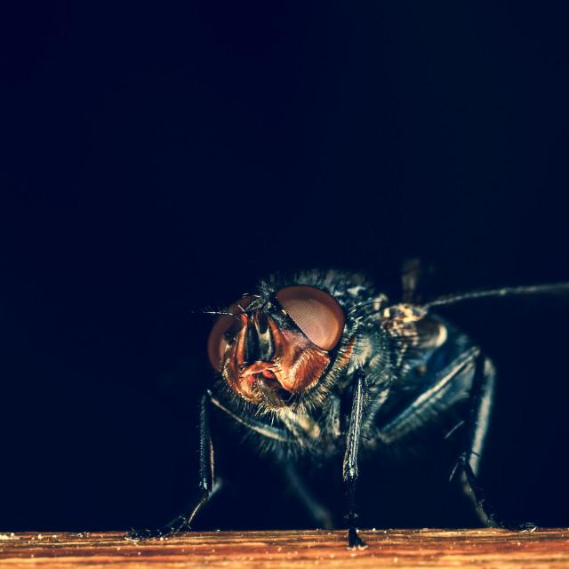 """""""Macro fly"""" stock image"""