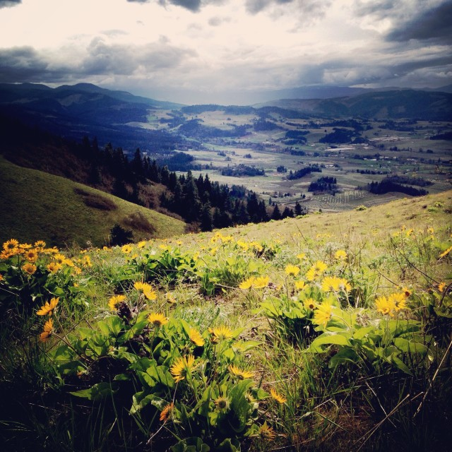 """""""Flowers in the Gorge"""" stock image"""